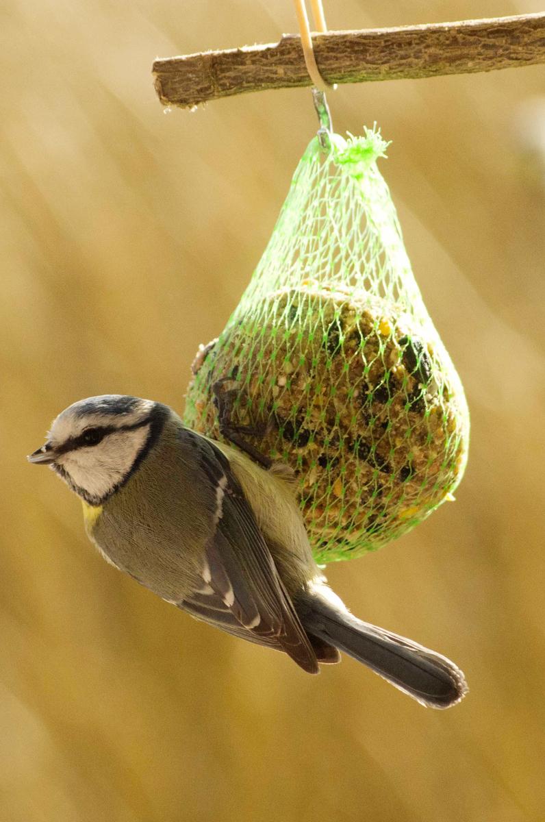 Atelier fabrique un poste de nourrissage pour les oiseaux honua - Porte boule de graisse pour oiseaux ...