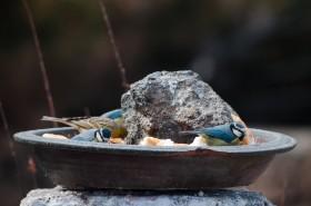 Mangeoire et oiseaux