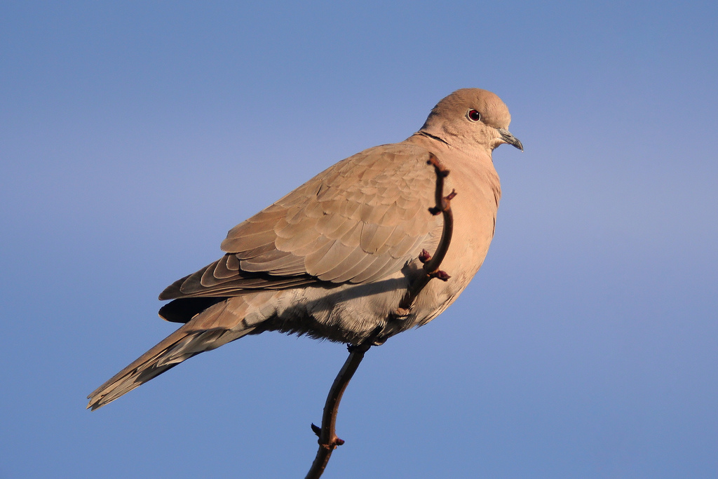 découverte] reconnaître les oiseaux du jardin et des balcons   honua