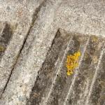 Lichen sur un recoin de trottoir. Tous droits réservés, Marion pour Honua