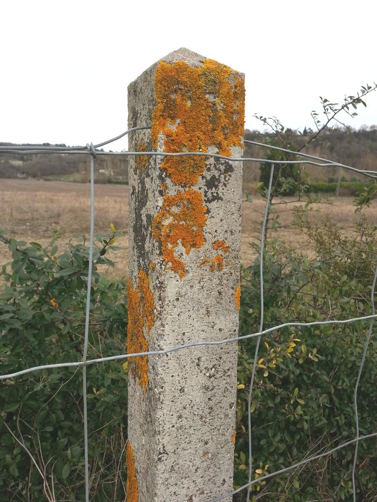 Lichens sur un poteau en béton. Tous droits réservés, Marion pour Honua